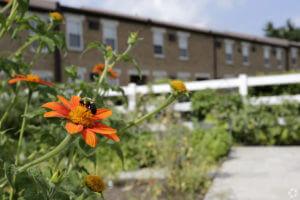Korman Residential - Willow Shores Garden's Flower with Bee